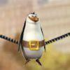 пингвины - Бесплатные игры пингвины