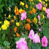 цветы - Задачка для цветовода