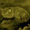 кошки - Ищем отличия среди кошек