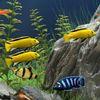 рыбки - Красивый аквариум с рыбками