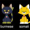 кошки - Онлайн игры кошки