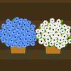 цветы - Цветочная лавка